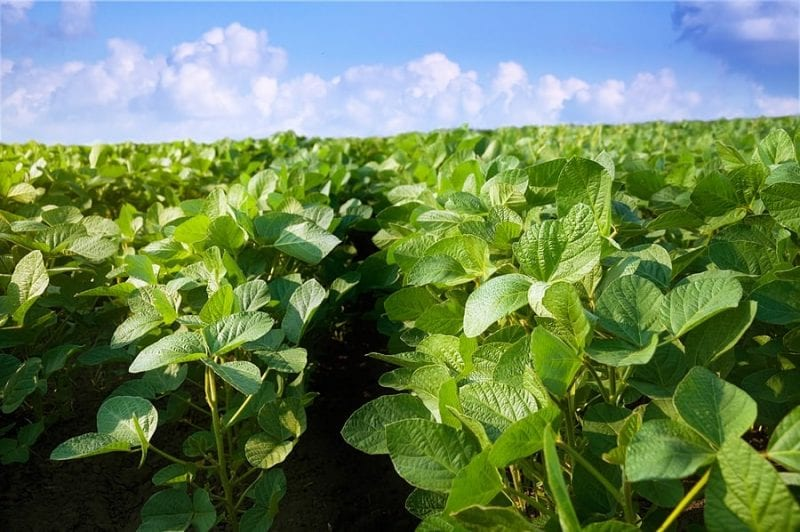 Soybean Futures Reach Open Interest Record of 1 Million Contracts