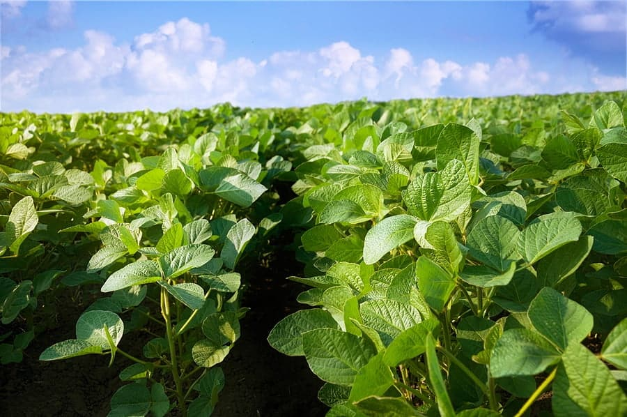 CME Group to Launch New South American Soybean (Platts) Futures Contract on September 21