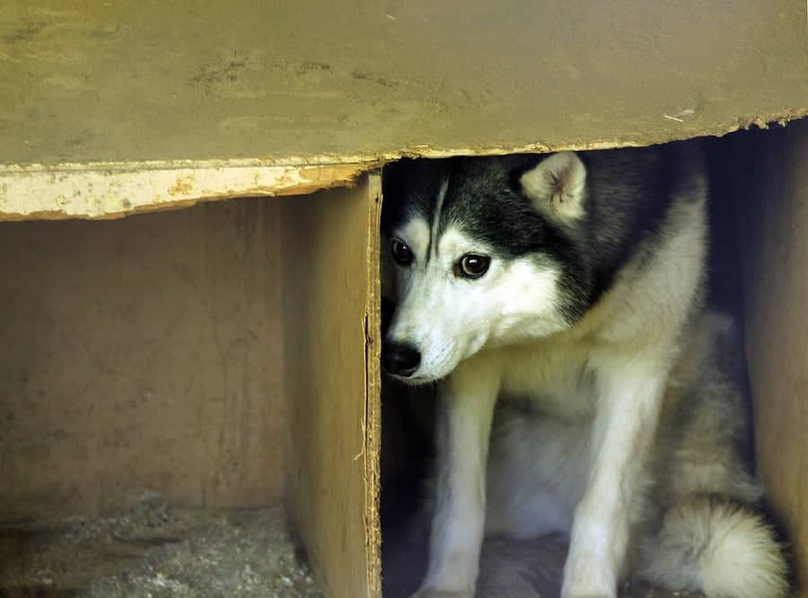 El Paso Police Arrested Jonathan Jay Oneal for leaving Husky to Perish in Heat