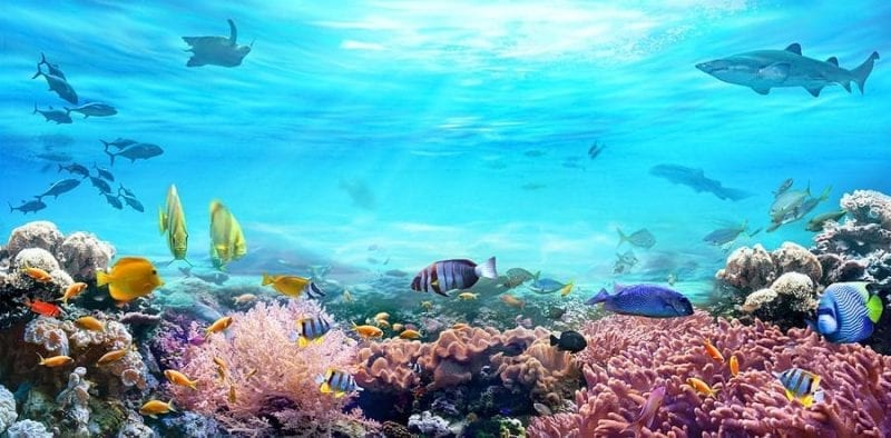 US?Signs Statement Reaffirming Commitments to Protect Marine Ecosystems