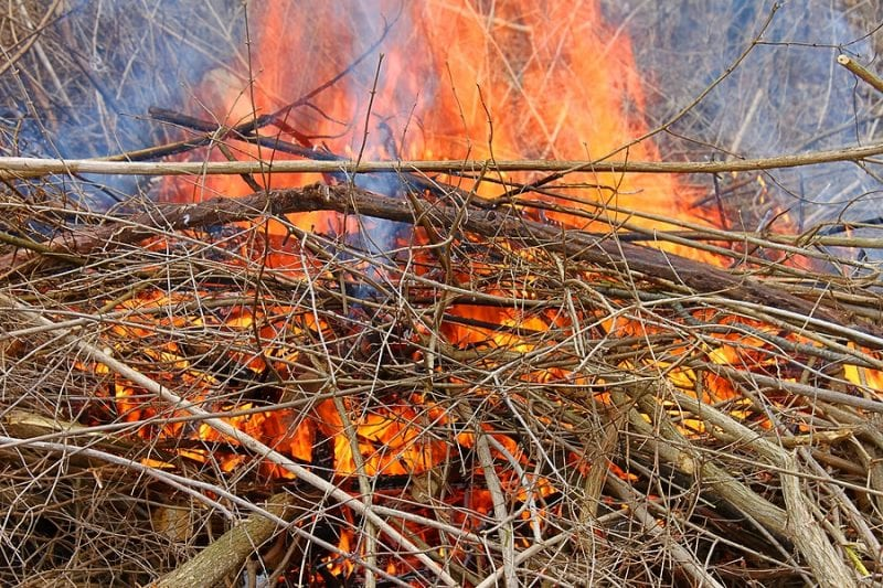 Bureau of Land Management to Burn Piles in South Steptoe Valley, NV