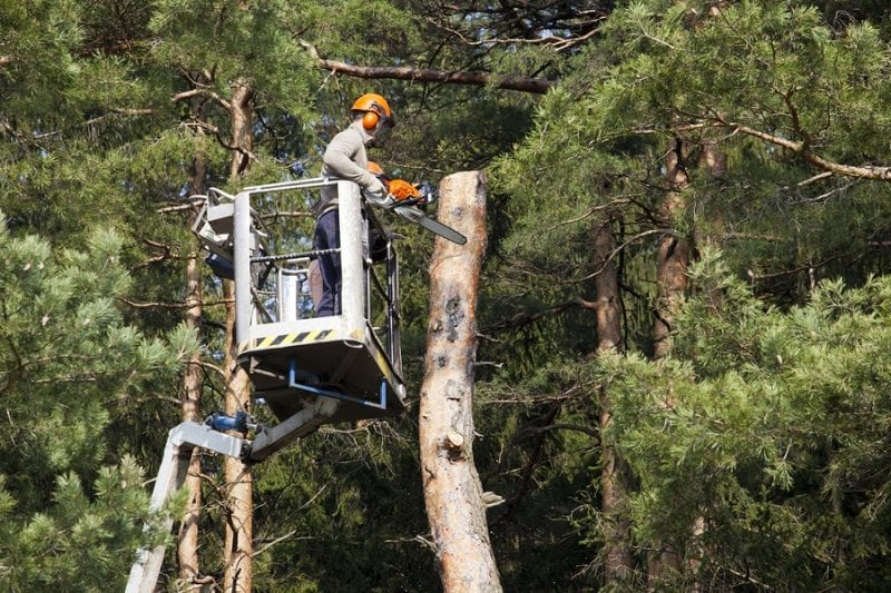 Complete Tree Service of St. Louis Recognized by Expertise.com
